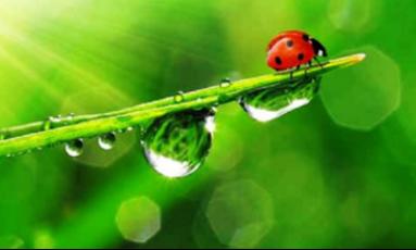 Środki ochrony roślin - Nysa